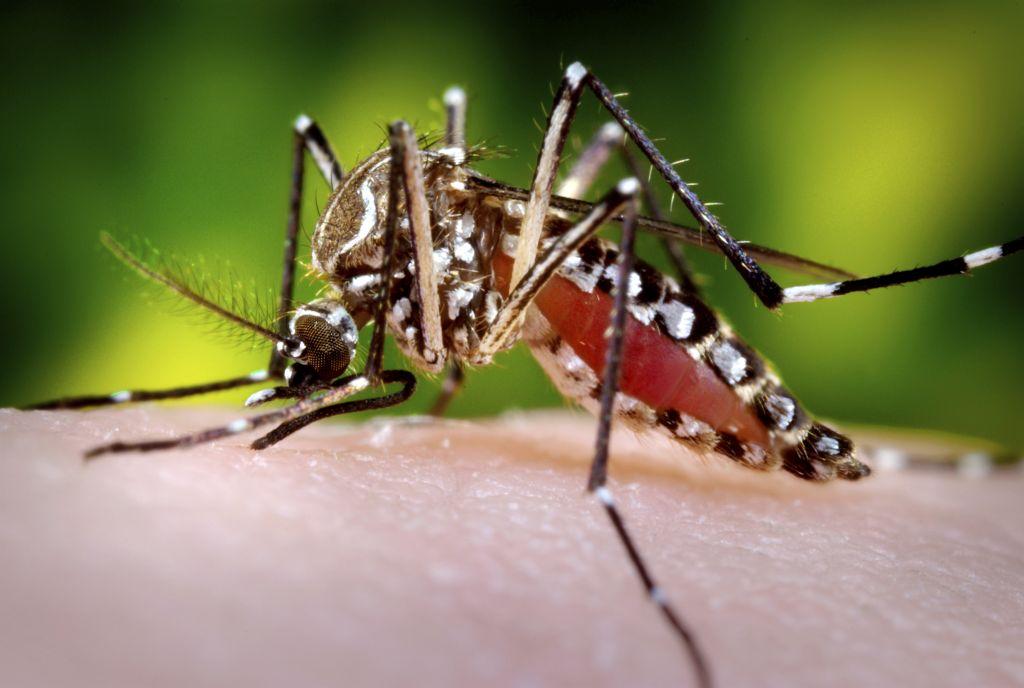 O ano de 2017 iniciou com 855 cidades brasileiras em situação de alerta ou de risco de surto de dengue, chikungunya e zika